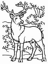 Coloring Hunting Deer Printable Elk Hunter Drawing Animal Drawings Bull Forest Clipart Cartoon Clip Colorings Simple Clipartmag Getcolorings Getdrawings Template sketch template