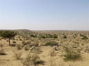 In Pictures: Pakistan's parched Thar desert | | Al Jazeera