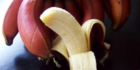 pisang berwarna merah tak hanya unik namun juga super