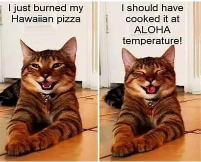 Memes Humorous Laughter Humour Catmemes Cat Laguna