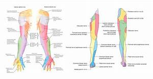 cervical radiculopathy dermatomes - Google Search ...