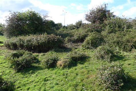 of bush bramble clearance solent reserves blog