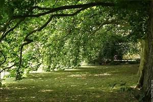 Avre De Paix : havre de paix arbre platane nature platanus photo ~ Melissatoandfro.com Idées de Décoration