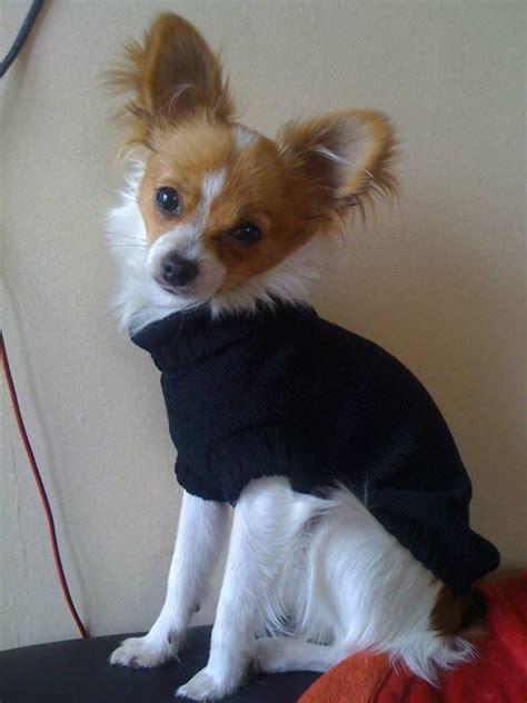 Hundepulli,Pullover für Hunde *BLACK CAGNOLINO