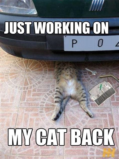 Funny Mechanic Memes - cat memes funny cats cat mechanic awesome and funny picture mix pinterest