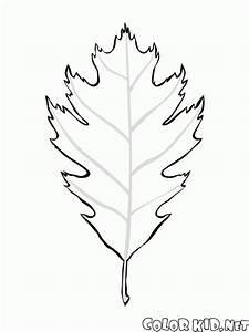 Malvorlagen Birkenbltter