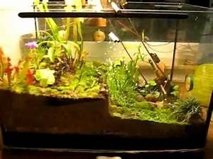 Pflanzen Für Terrarium : terrarium mit bewegung nov 2009 youtube ~ Orissabook.com Haus und Dekorationen