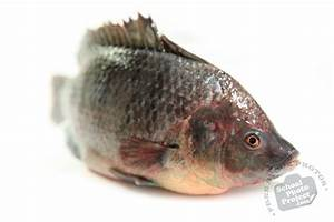 Fresh Water Fish, FREE Stock Photo, Image, Picture ...