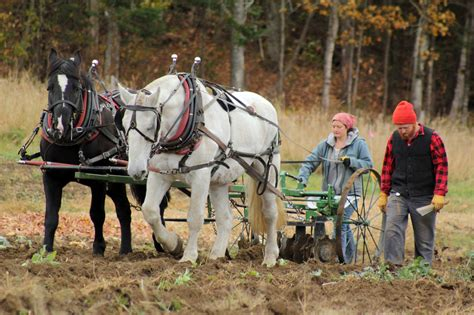 draft horse agriculture sustainable management working farming farms agricultural vermont sterlingcollege edu