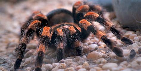 animales invertebrados exploradores digitales