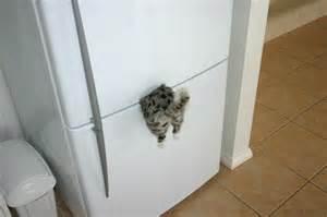 cat magnets refrigerator magnet