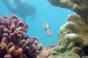 Scuba And Snorkel Tours On Kauai Poipu Beach Kauai