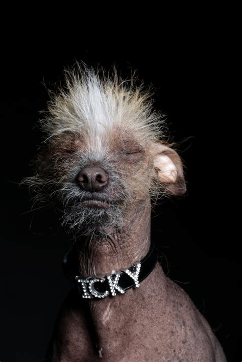 these are officially the ugliest dogs in the world wired