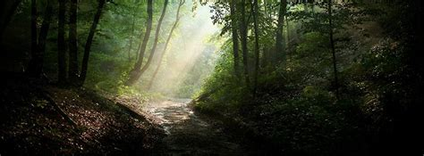 facebook cover nature dark forest green hipiinfo