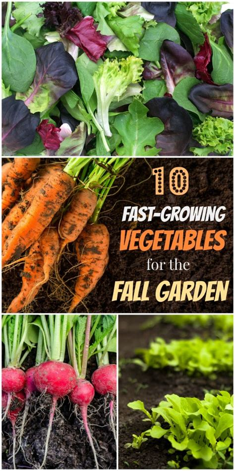 what can you plant in the fall plant these speedy fall vegetables for a last hurrah