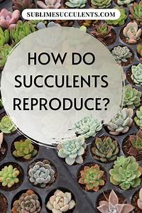 How Do Succulents Reproduce In 2020