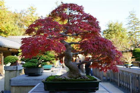 olive garden alabaster bonsai gardens me garden ftempo