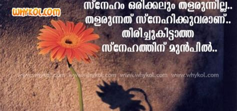 malayalam quotes  images list  love quotes