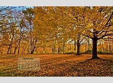 November Wallpaper Joel Neild Photography