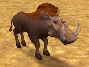 Giant Warthog | Zoo Tycoon 2 Wikia | FANDOM powered by Wikia  Metridiochoerus