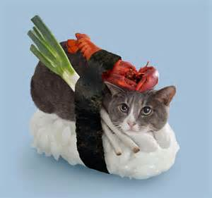 sushi cats when two amazing worlds collide welcome to the world of