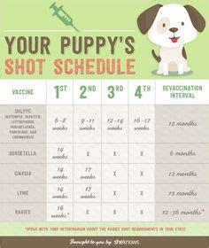 dog birth certificate template puppy birth certificates