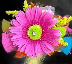 gerber daisy corsages