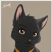 anime black cat gold yellow anime pictures images photos photobucket