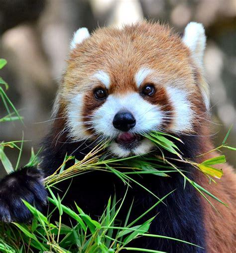 34 Super Cute Animals (31) Funoramic