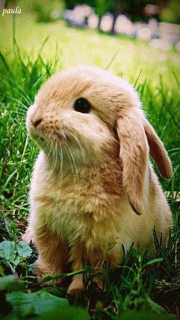 breathing rabbit animated gif luvbat