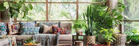 Best Indoor Plants For Delhi Ncr Weather Conditions