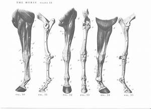 207 Best Equine Anatomy Images On Pinterest
