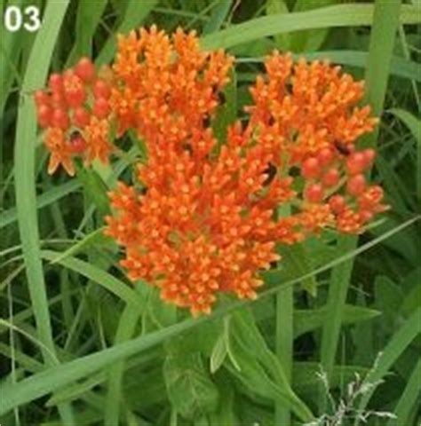 22 Best Illinois Native Plants Images On Pinterest