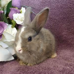 Cute Baby Bunny Rabbits
