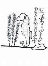 Seaweed Coloring Pages Seahorse Drawing Kelp Around Its Printable Getcolorings Nature Getdrawings sketch template