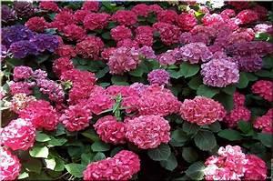 Plantes Pour Jardin Japonais Exterieur : plantes de jardin pour d corer votre ext rieur oh green ~ Premium-room.com Idées de Décoration