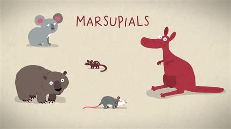 Три способа появления на свет у млекопитающих Озвучка