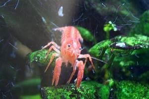 Tiere Für Aquarium : tetra 211933 aquaart crayfish aquarium komplett set 30 l ~ Lizthompson.info Haus und Dekorationen