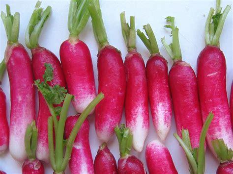 cuisiner les radis le radis