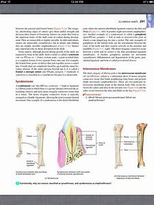Principles Of Anatomy And Physiology  Chapter 9  Joints  3
