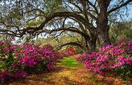 Spring Flowers Photography Charleston …