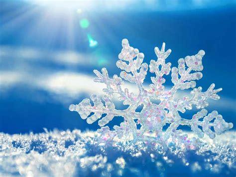 snowflakes  snow seebtm magazine