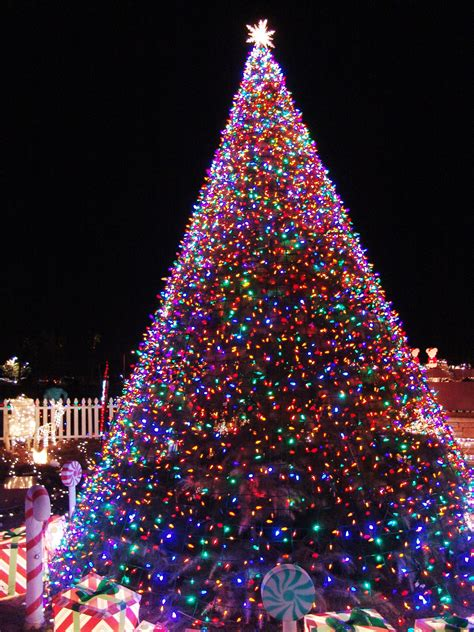 christmas lights in trees 11 awesome and dazzling christmas tree lights ideas