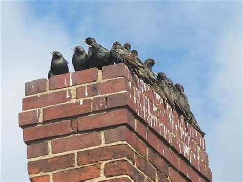 Ace Home Inspection, Inc » Chimney Birds