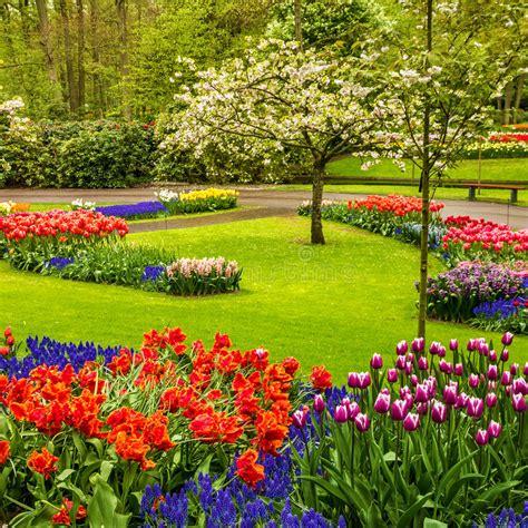 tulip flower garden free stock park keukenhof tulip flower garden holland stock photo image of meadow netherlands 78878298