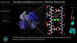 Making Protein Diagram