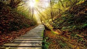 Wallpaper, Park, Autumn, Path, Trees, Sun, Rays, 3840x2160