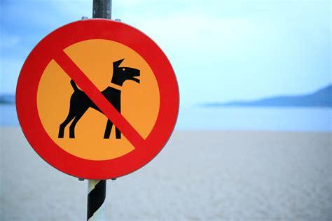 Posso Portare Il In Spiaggia by Regole Per I Cani In Spiaggia Ecco Tutte Le Risposte