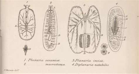 darwin  overview  illustrations  maps
