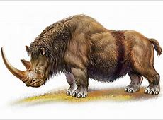 Woolly Rhino Extinct Animals